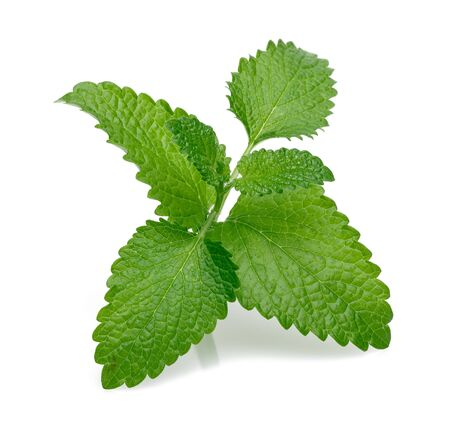 Fresh lemon balm or melissa isolated on white background