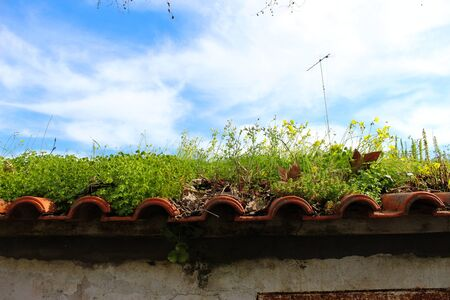 a paradise on the roof, various plants on the tile roof, background, wallpaper, nature always wins