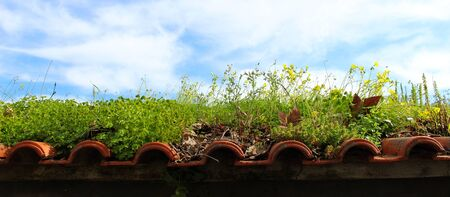 a paradise on the roof, various plants on the tile roof, background, wallpaper, nature always wins 写真素材