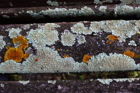 Fungus on the wooden bench. Beja, Portugal. Imagens