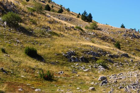 Nature, meadow, rocky, bushes, trees. On the mountain Bjelasnica, Bosnia and Herzegovina.
