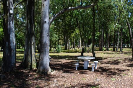 Park, forest, picnic area and table. Park in Beja, Portugal.