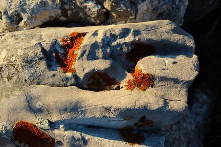 Orange lichen colonies on stone. On the mountain Bjelasnica, Bosnia and Herzegovina.