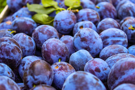 Full frame of fruit plums, prunus domestica. Zavidovici, Bosnia and Herzegovina.