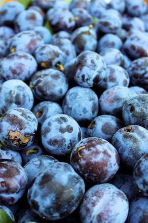 Vertical shot of blue plums. Fruits of prunus domestica. Zavidovici, Bosnia and Herzegovina.