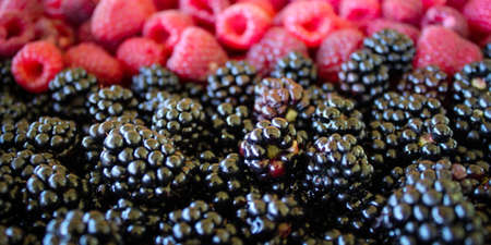 Banner. Close up of blackberries and raspberries in the background. Zavidovici, Bosnia and Herzegovina.