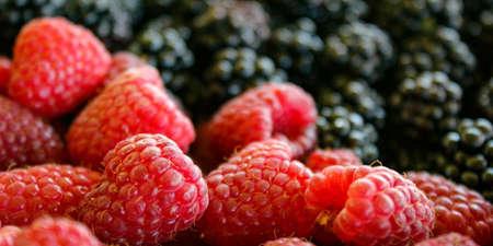 Banner. Close up of raspberries and blurred blackberries in the background. Zavidovici, Bosnia and Herzegovina.