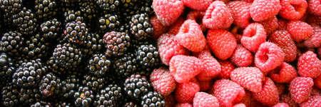 Banner of the blackberries and raspberries. Left side of blackberries, and right side raspberries. Zavidovici, Bosnia and Herzegovina. 写真素材