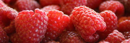 Banner of raspberries. Close up of raspberries. Zavidovici, Bosnia and Herzegovina.