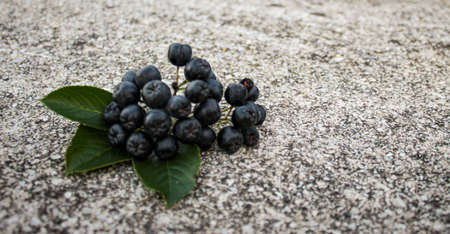 A group of chokeberry berries with three leaves on the concrete. Aronia berries. Zavidovici, Bosnia and Herzegovina. 写真素材