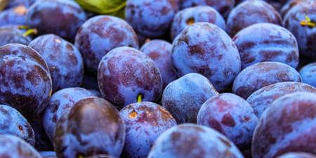 Banner of fruit plums, prunus domestica. Zavidovici, Bosnia and Herzegovina.