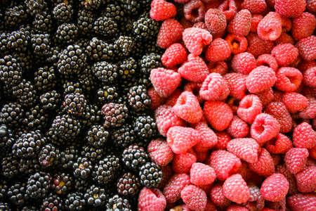 Full frame shot of the blackberries and raspberries. Left side of blackberries, and right side raspberries. Zavidovici, Bosnia and Herzegovina. 写真素材