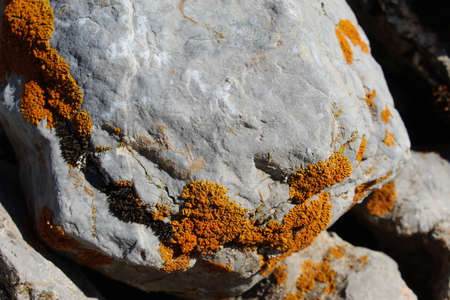 Orange spots (lichens) on a rock in the mountains. Mountain Bjelasnica, Bosnia and Herzegovina.