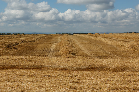 recently: Newly harvested wheat field against a cloudy sky