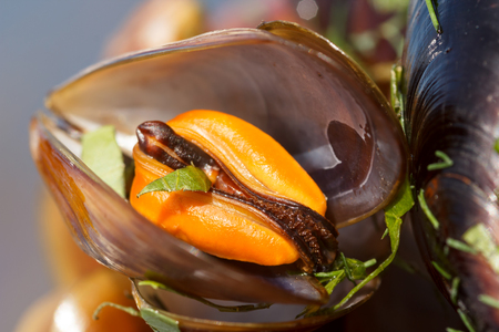 Extreme close up of a mussel in a shell, boiled with lovage. Shallow depth of field, focus on the mantle edge