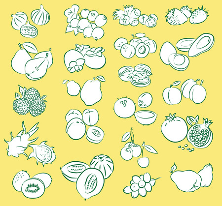 rasberry: vector illustration of fruits collection
