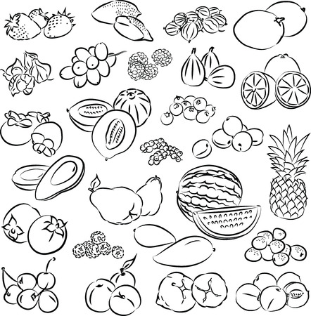 vector illustration of fruits collection in black and white