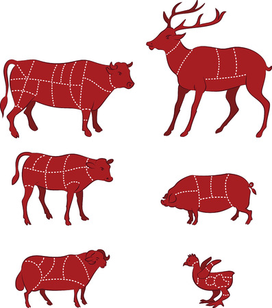 veal: vector illustration of Diagram Guide for Cutting Meat Illustration