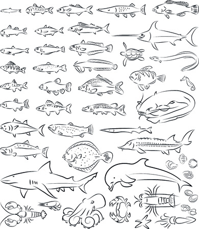 pilchard: vector illustration of sea fishes and creatures collection
