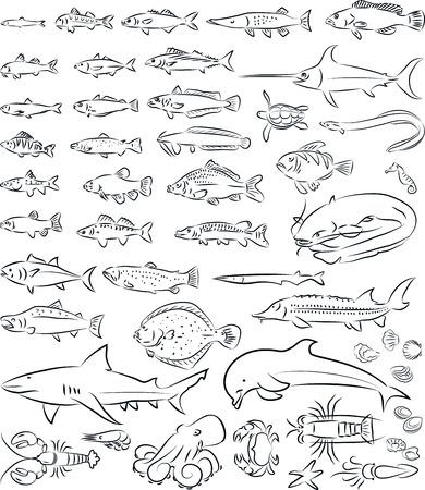 Vektor-Illustration von Meer Fische und Tiere Sammlung Standard-Bild - 26610276