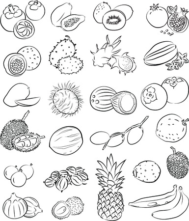 plantain: vector set of tropical fruits in line art