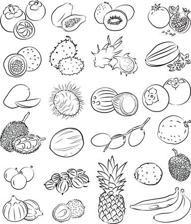 vector set van tropische vruchten in lijntekeningen Stock Illustratie