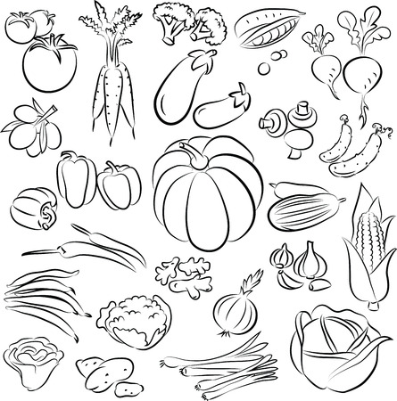 romaine lettuce: vector illustration of  vegetables collection in line art