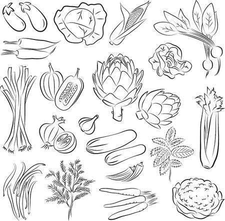 celery: Vector Illustration of vegetables in black and white Illustration