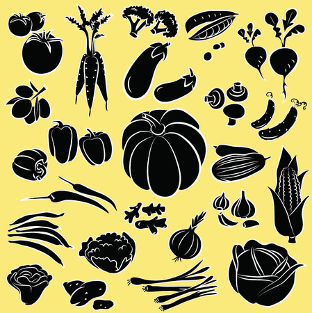 romaine lettuce: vector illustration of vegetables collection in black and white Illustration