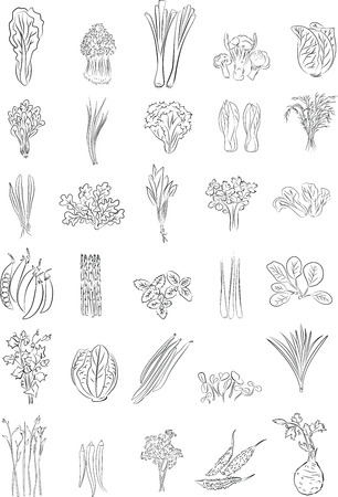 Vector illustration of Green Vegetables in line art mode Vector