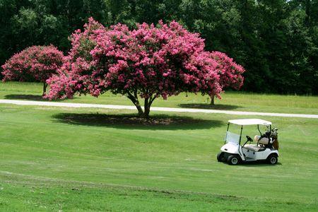 crepas: Carrito de golf cerca de Crepe Myrtle Foto de archivo