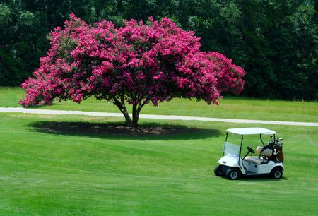 Golf cart in front of Crepe Myrtle tree