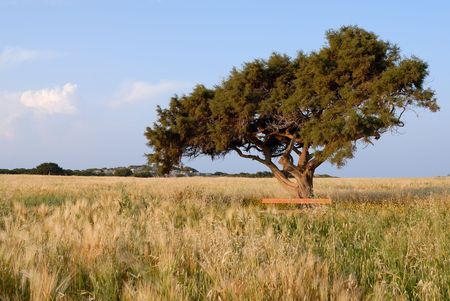 Lonely tree on a meadow Stock Photo - 2225006