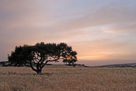 Lonely tree in evening twilight Stock Photo - 2256874