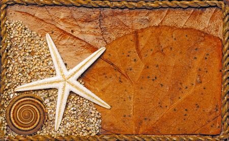 Seashell and starfish background Stock Photo