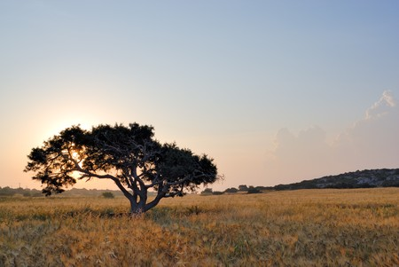 Lonely tree on a meadow at a dawn Stock Photo - 3994930