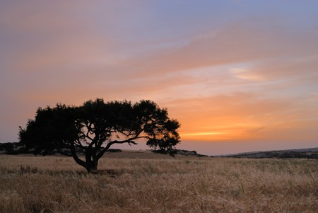 Lonely tree on a meadow at a dawn photo