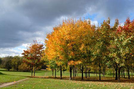 Autumn tree in park Stock Photo - 5666713