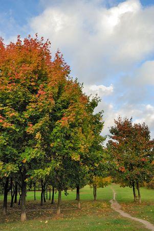 Autumn tree in park Stock Photo - 5691857