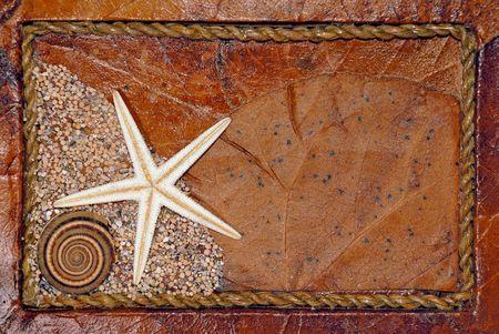 Seashell and starfish background photo