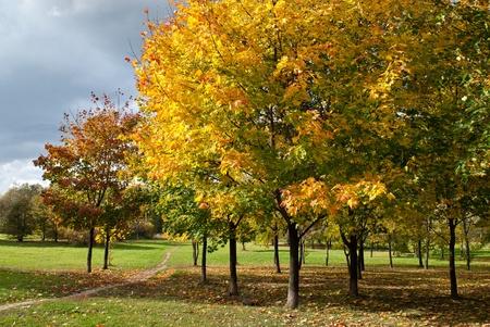 Autumn tree in park photo