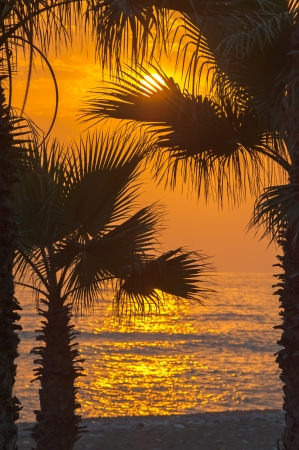 Palm silhouettes against sunset over the sea photo