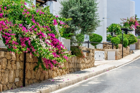 Flower street with white residential houses photo