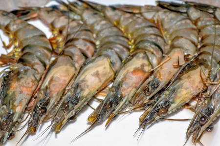 Close-up view of fresh shrimps photo