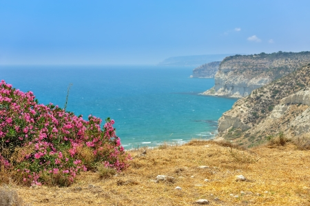 Landscape with flower bush on sea coast photo