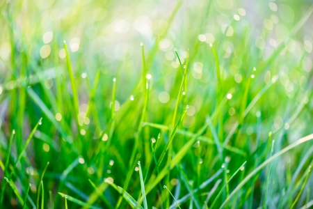 Close-up view of dew drops on green grass photo
