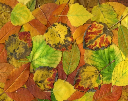 Colorful background of autumn leaves photo