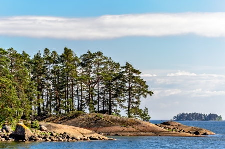 Pine forest on stony islands in finland gulf photo