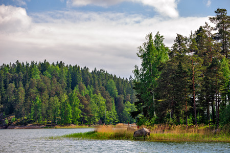 Landscape with pine forest on stony islands in finland gulf photo