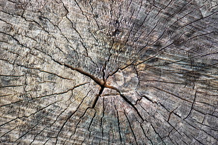 fractures: Old tree stump surface with cracks and fractures radiating from the center